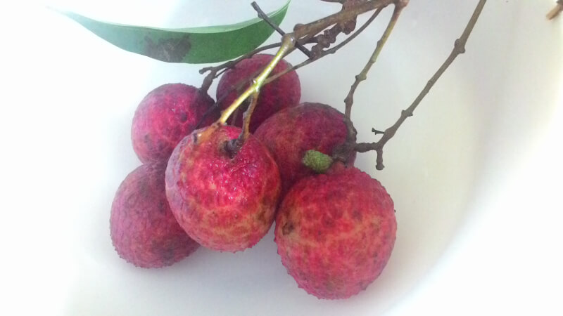 雨季の恩恵は果物